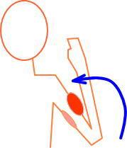 対の筋肉1