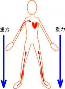全身の血流2