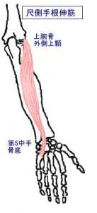 m尺側手根伸筋